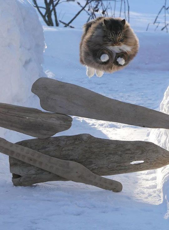 A Majestic Soaring Cat