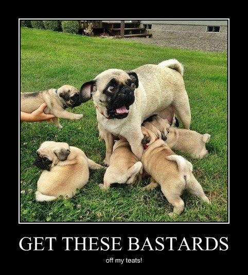 dogs funny scary mother