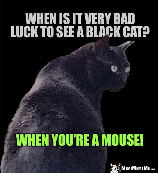 Black Cat Joke When is it very bad luck to see a black cat
