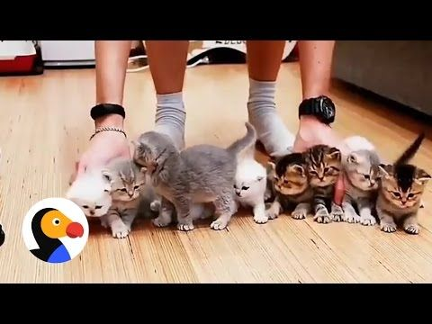 Adorable Kittens Won t Sit Still For This Picture