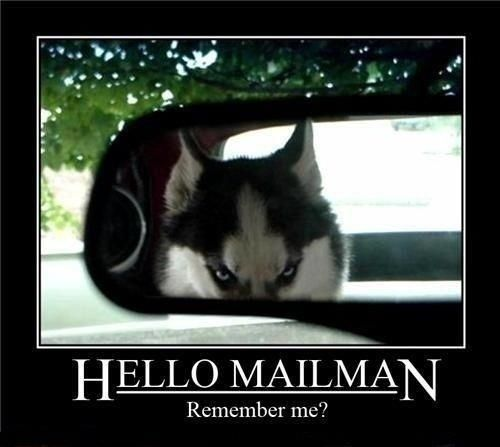 Watch the Inspirational Dog Mailman Memes Funny