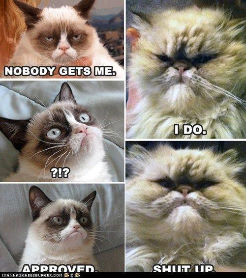 Grumpy Cat funny