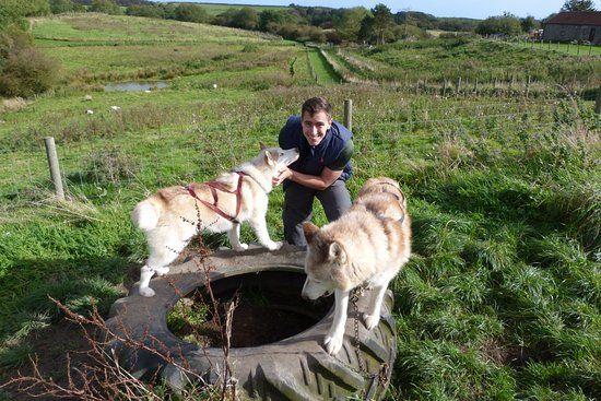 Pesky Husky Having fun with the dogs