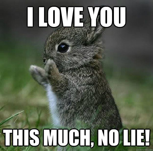 I love you this much no lie funny love meme picture
