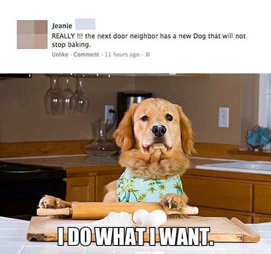 the dog that will not stop baking