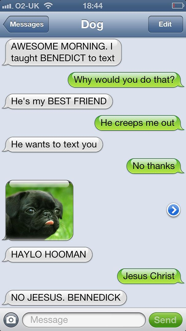 texts from dog 13