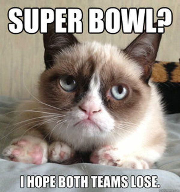 9 Best Grumpy Cat Memes 3