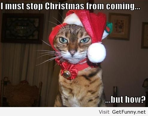 Funny Cats ready for some Christmas Fun
