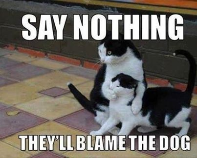 Funny black and white cat memes 51 Memes