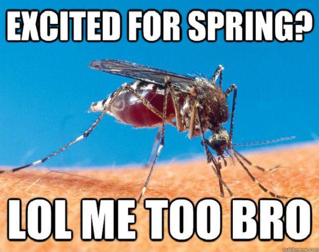 Mosquito Spring Meme