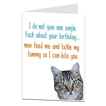 Watch the New Funny Youre Invited Cat Birthday Pictures
