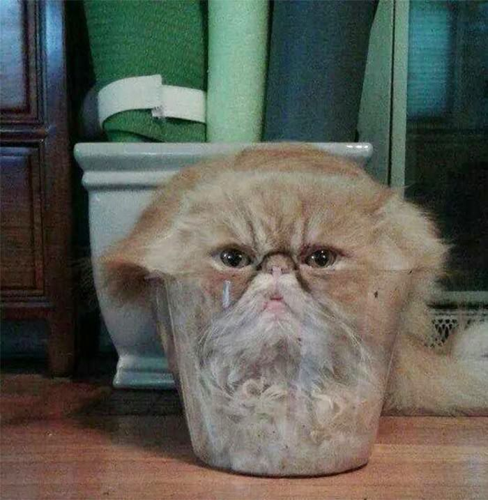 Cat Climbed Into Clear Plastic Flower Pot