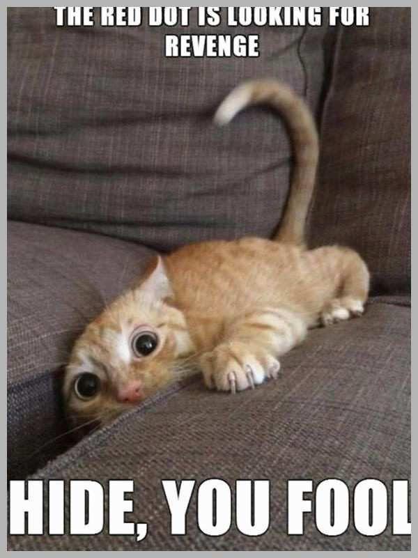 Cute Kitty Meme Marvelous Funny Cat Memes Best Cute Kitten Meme and Cute Kitty Meme