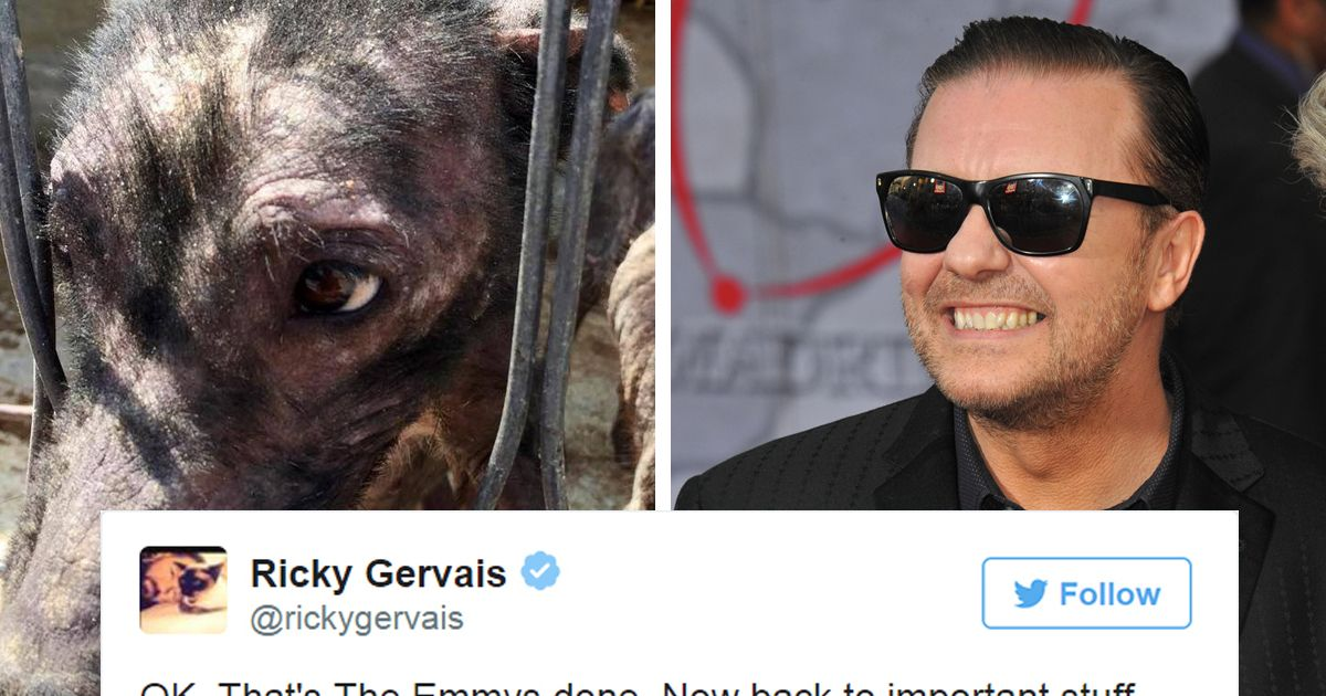 Ricky Gervais s Tweet Saves 650 Starving And Abused Dogs Animals Entertainment