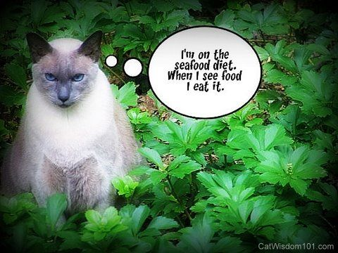 cat wisdom 101 merlin fat cats