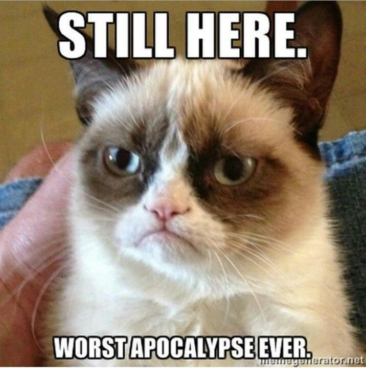 Grumpy cat wouldn t be impressed even if there was an apocalypse