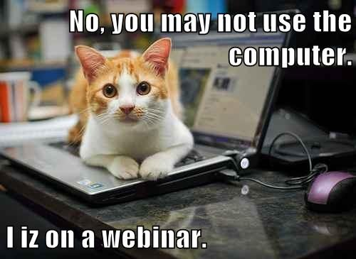 Friday Funny Cat Webinar