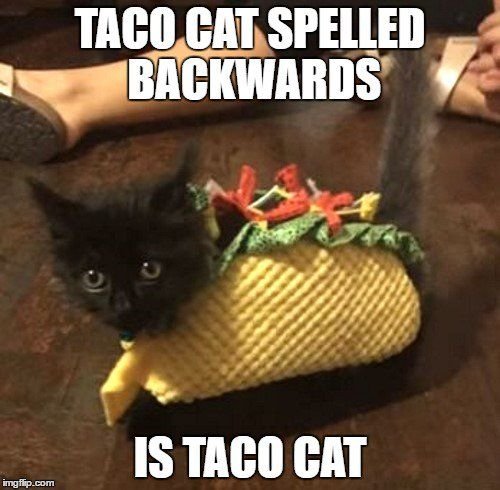 Watch the Shocking Funny Cat Memes that Look Funny