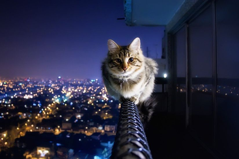 Funny Cat Wallpapers for Desktop Download free cute cat Background HD