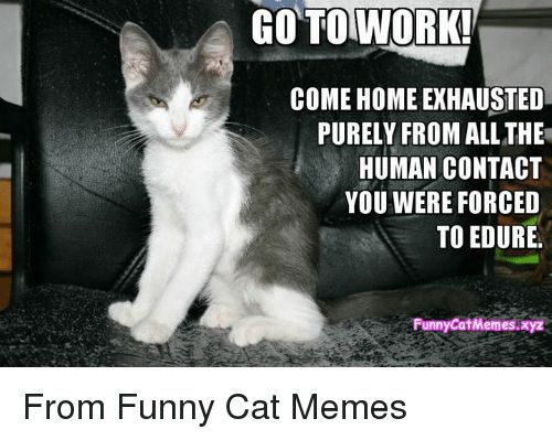 Memes 🤖 and Force GO TO GO TO WORK E HOMEEXHAUSTED PURELY From Funny Cat Memes via Message