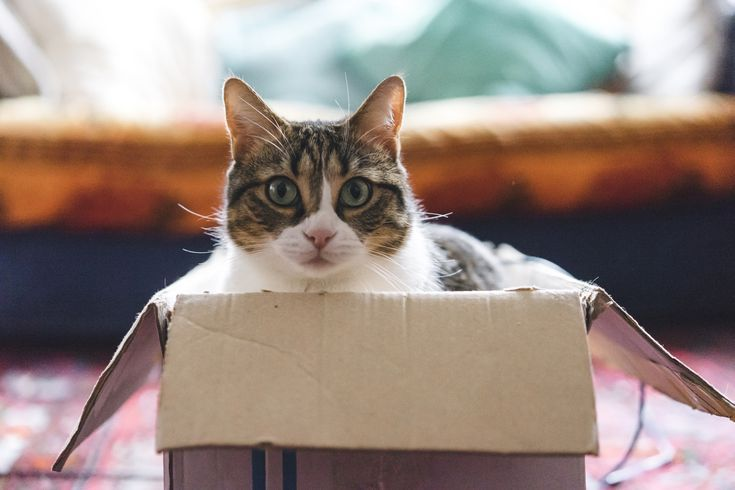 cat playing with boxes and toys 5c579ea946e0fb f138