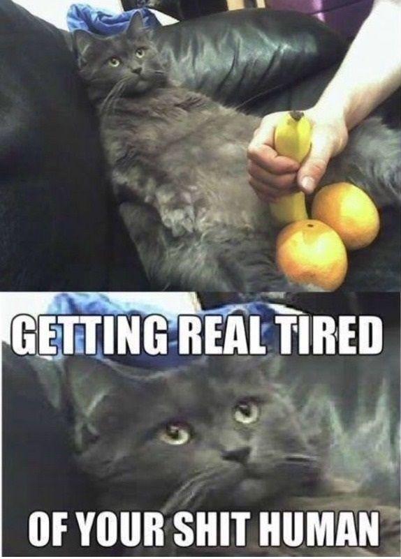 funny cat banana not funny