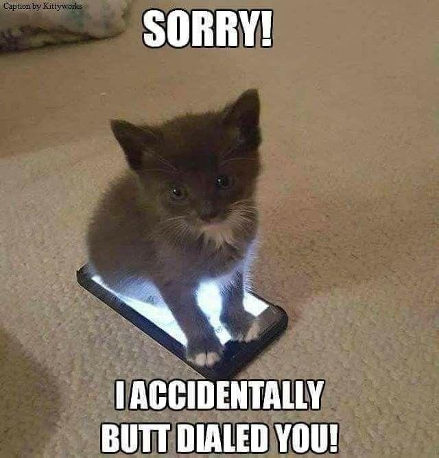 Kitten meme