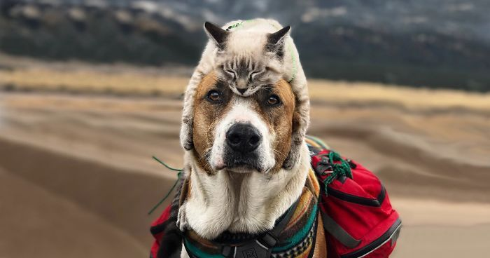 This Cat And Dog Love Travelling To her And Their Are Absolutely Epic
