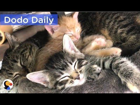 Feral Cat Be es Grandpa To Kittens