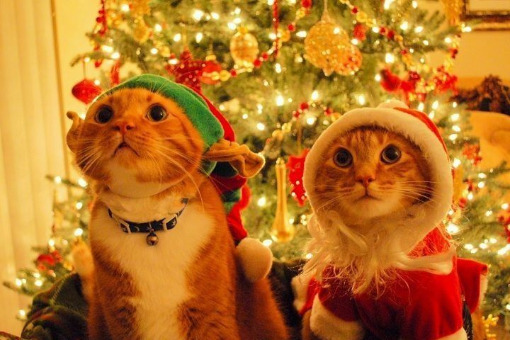 Christmas Funny Cats Wallpaper