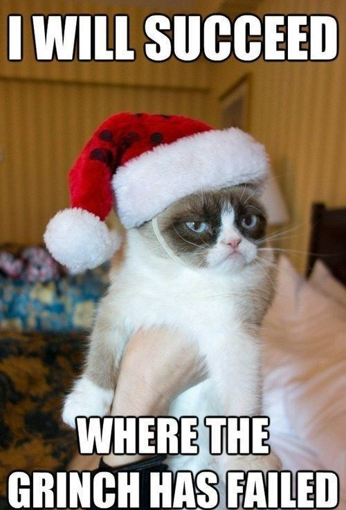 15 Funny Christmas Cats s