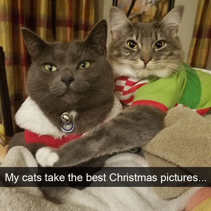 Watch the Unbelievable Christmas Funny Cat Pictures