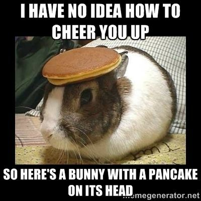 Bunny with Pancake on Head I have no idea how to cheer you up so here s a bunny with a pancake on its head