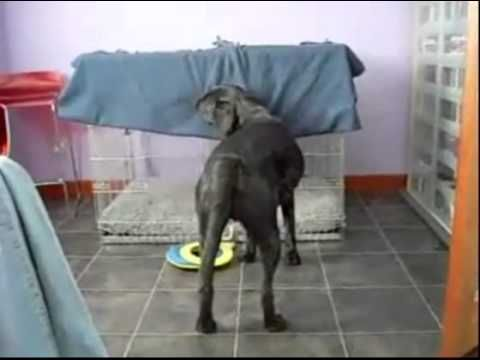 Dog Tucks Himself Into Bed