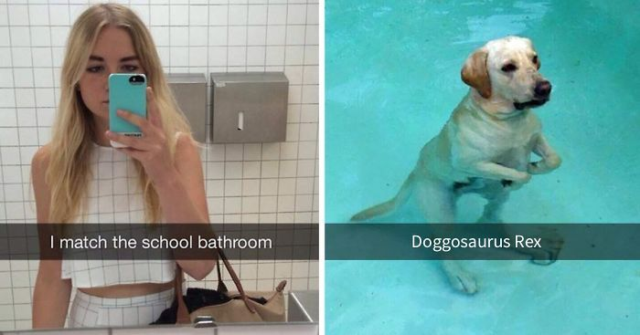Watch the Unbelievable Funny Golden Retriever Dog Pictures