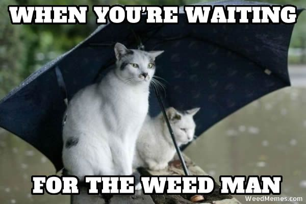 waiting for weed man memes