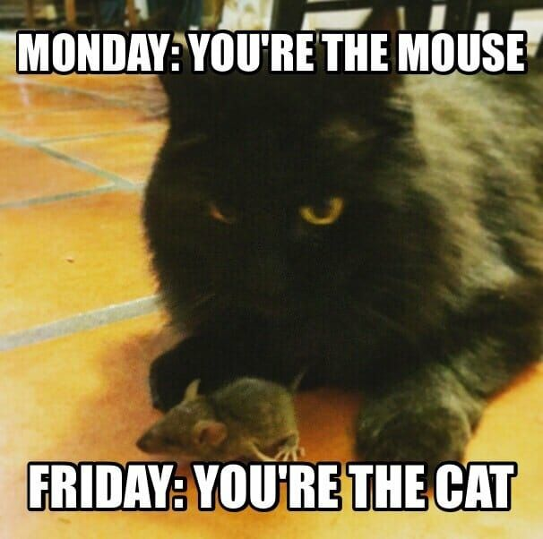 Monday you re the mouse Friday you re the cat