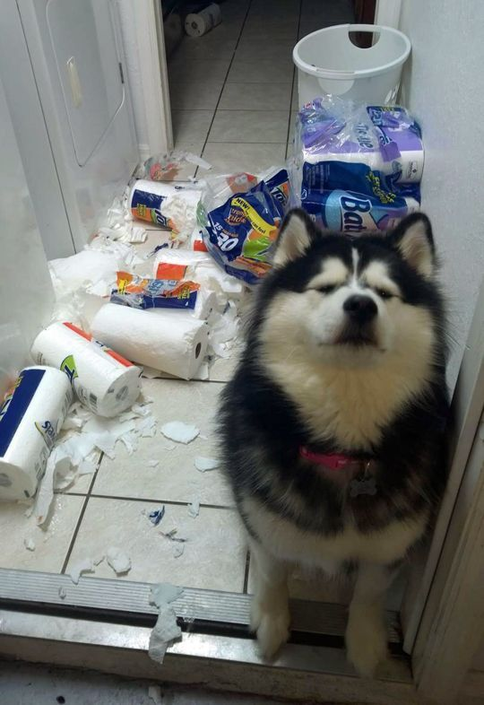 Funny Dog s Funny Animal Funny Animals Dog Shaming