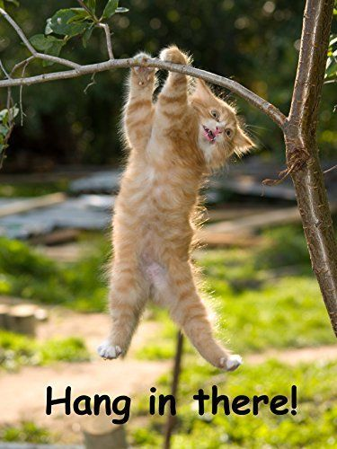 Hang in There Cat Poster Printed on Premium Cardstock P