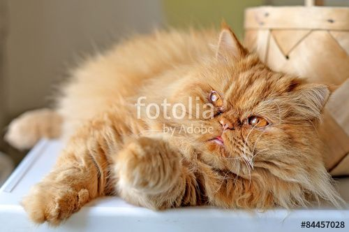 Funny red cat lying near a basket by the window