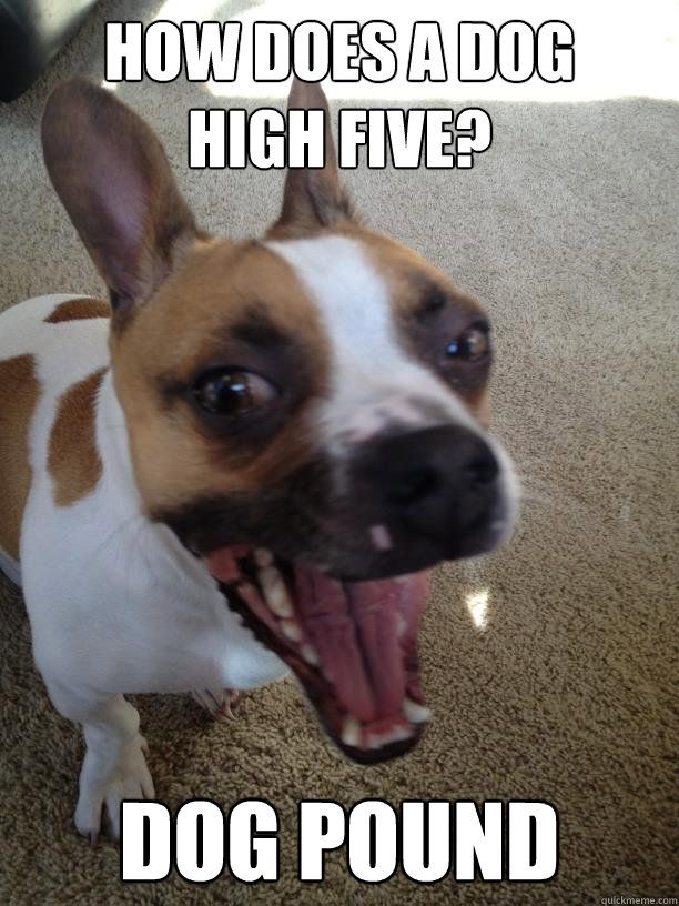 how does a dog high five dog pound
