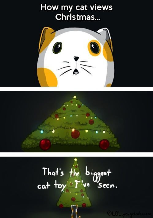 Cats and Christmas