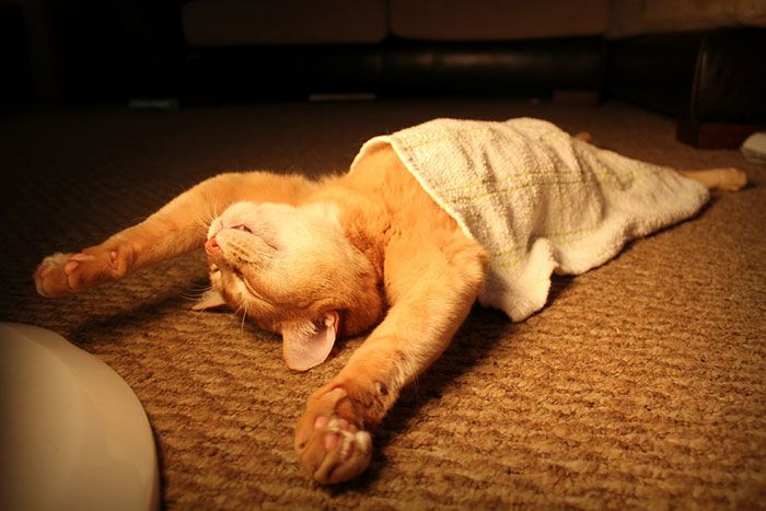 30 Cats Who Have Mastered The Art Sleep Fu