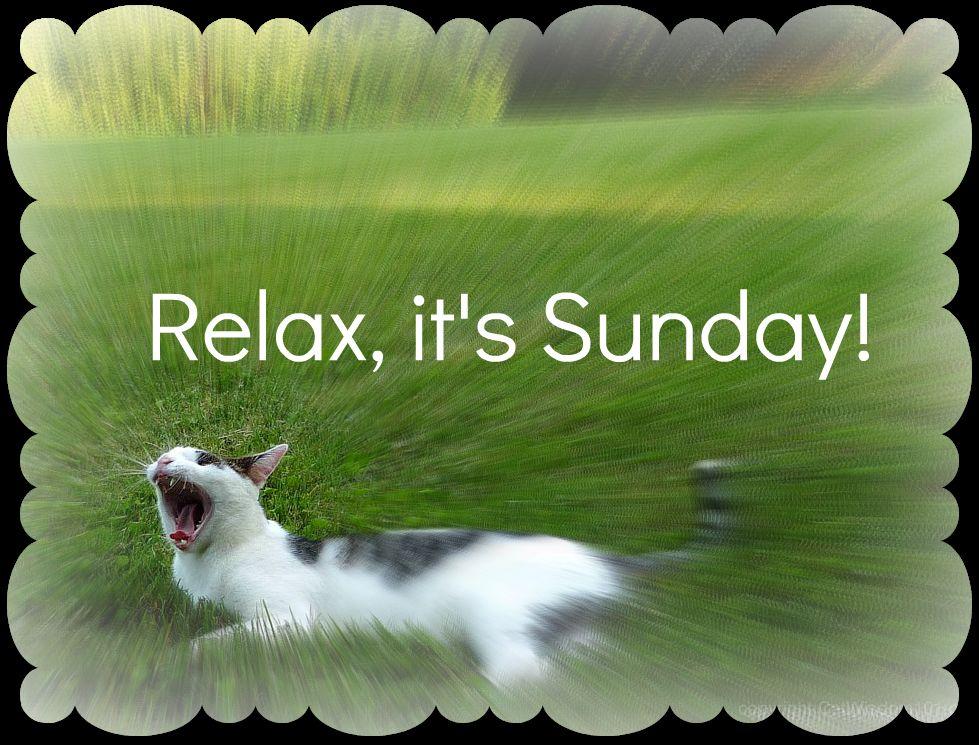 Relax It s Sunday Cat Quotes