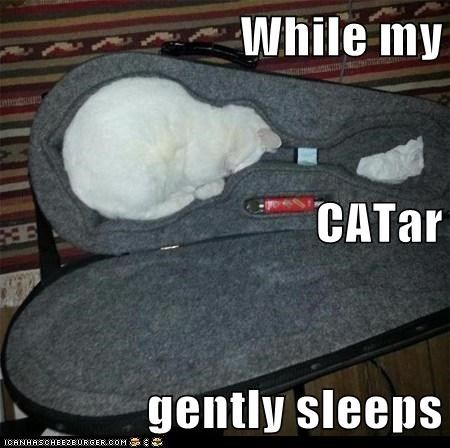 Catch the Awesome Funny Cat Pictures with Music