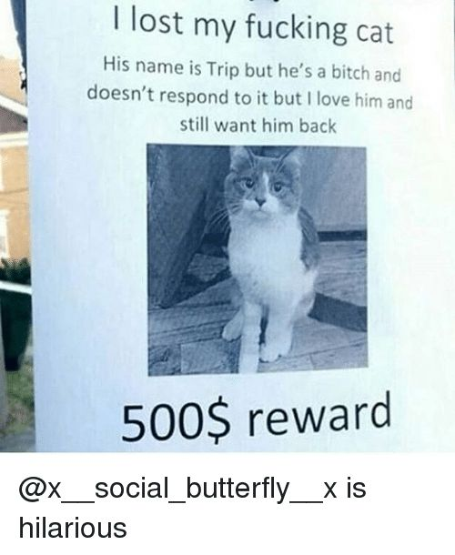 Bitch Fucking and Funny I lost my fucking cat His name is Trip
