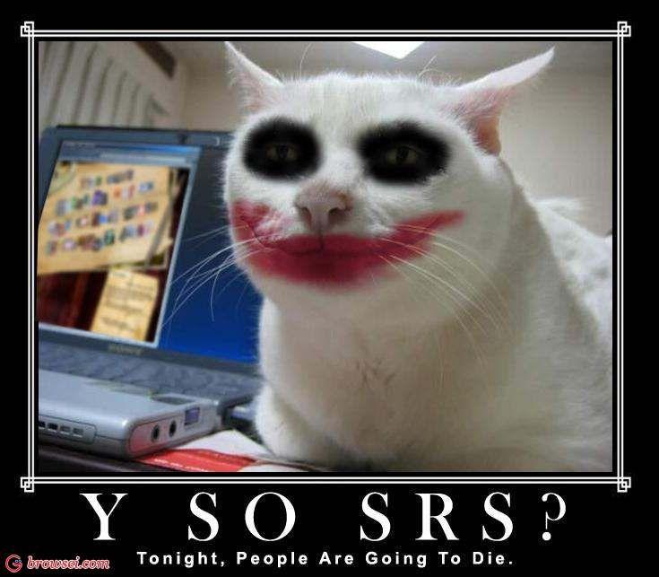 Funny Cat Pics %