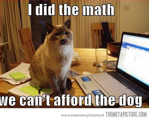funny cat dog laptop puter