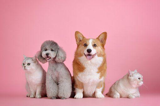Pets Cute Cat Dog