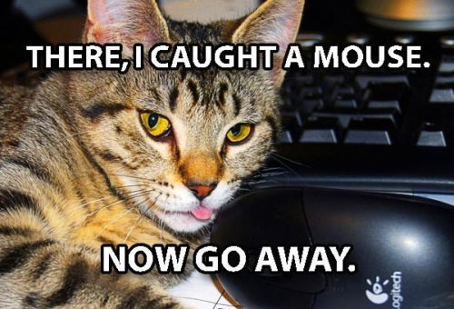 Funny Cat Meme Refrigerator Magnet 3 x 2 puter Caught Mouse Tabby funnycatpics funnycats catmemes funnymemes humor
